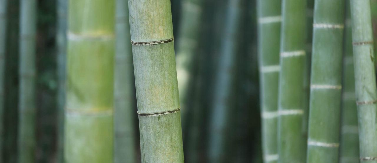 Activos Belleza - Bamboo