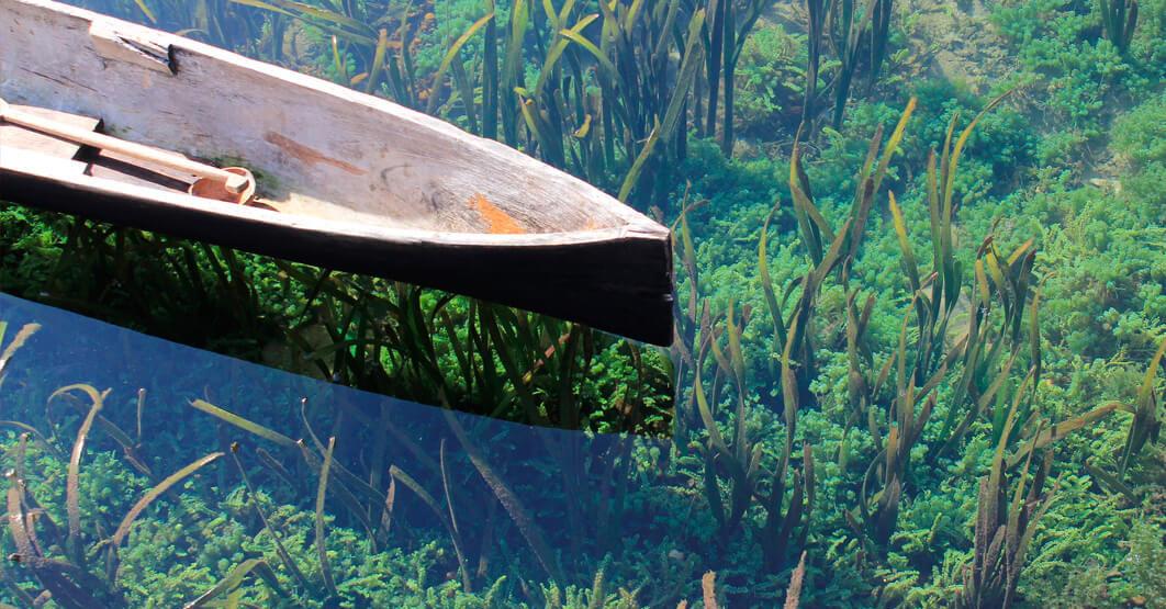 Activos Belleza - Canoa Algas