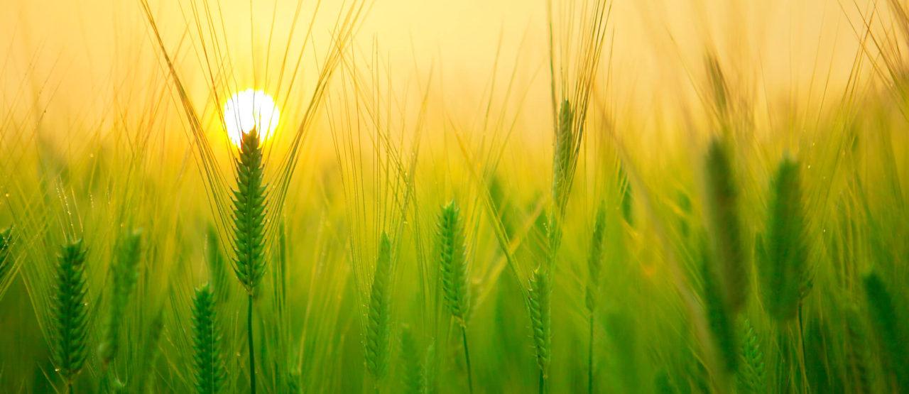 Pon aceite en tu vida - Germen de trigo - Alice in Beautyland