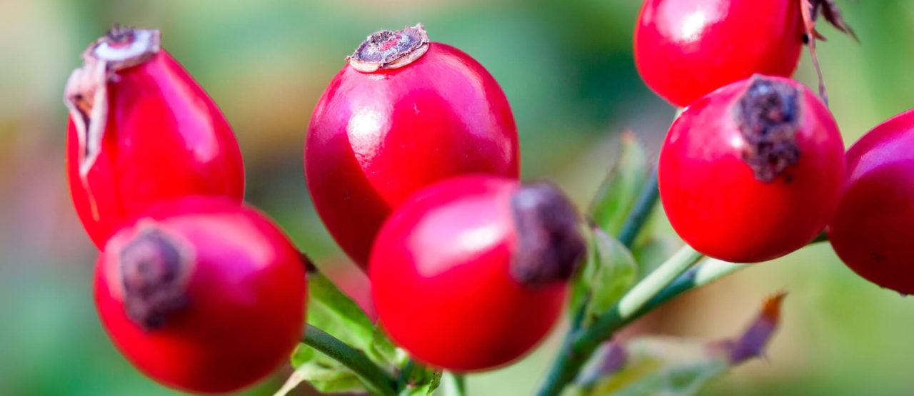 Pon aceite en tu vida - Rosa mosqueta - Alice in Beautyland