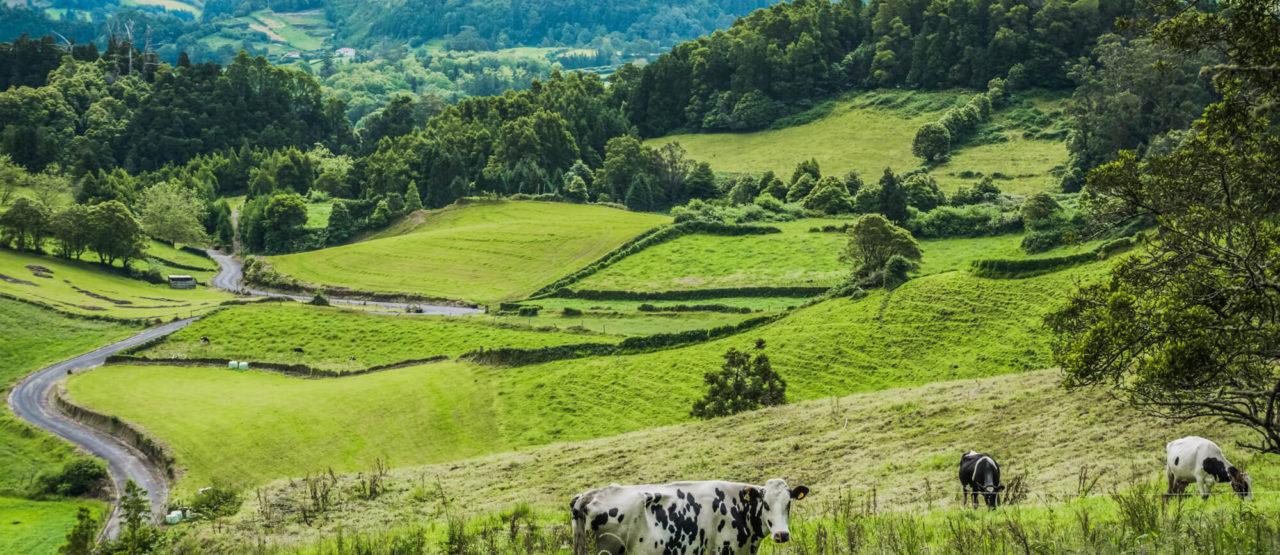 Alimentacion Biologica - Alice in Beautyland - Cows