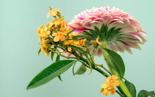 Aromaterapia Aromas que embellecen
