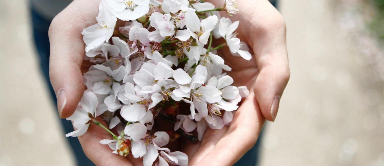 Aromaterapia-Aromas que embellecen-Alice in Beautyland-Flores blancas