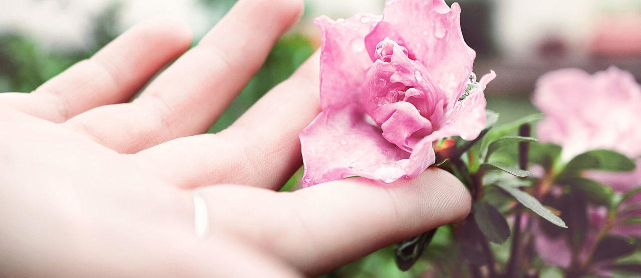 Aromaterapia-Aromas que embellecen-Alice in Beautyland-Rosa