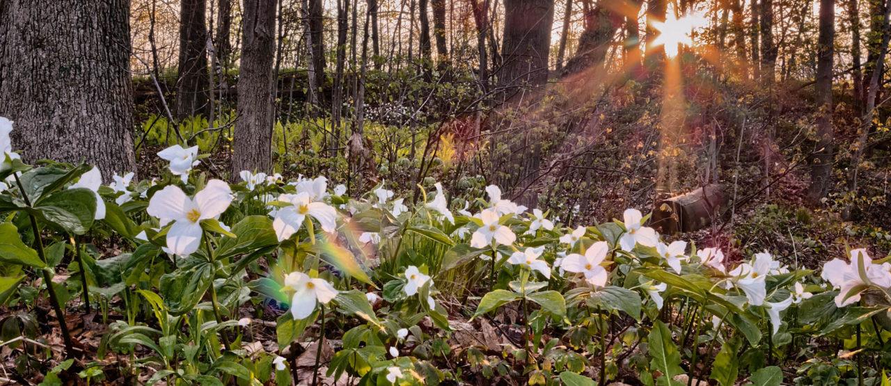 La belleza de las almendras-Alice in Beautyland Blog-Sunlight