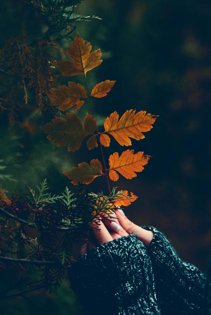 El Amarillo-tendencia-Alice in Beautyland-Nature