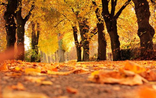 El amarillo, tendencia de otoño