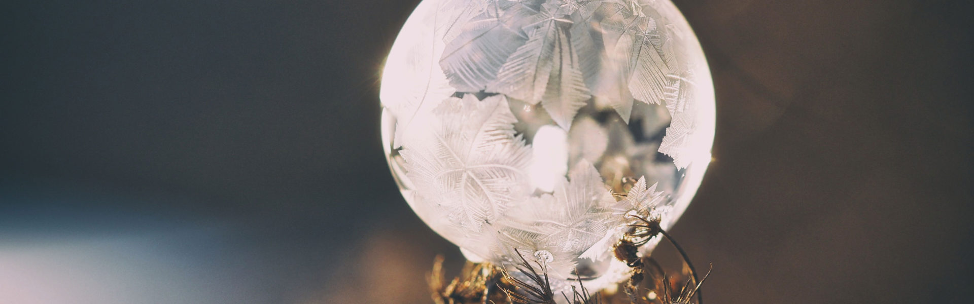Rosa Polar - La Belleza que vino del frio - Alice-in-Beautyland - Frozen
