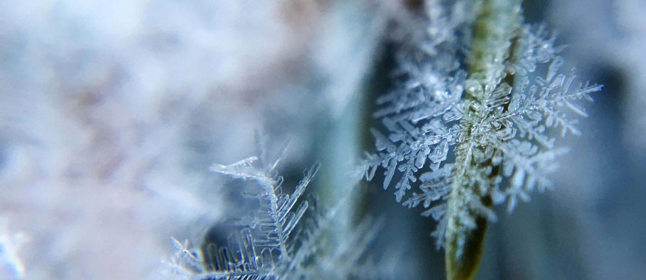 Rosa Polar - La Belleza que vino del frio - Alice-in-Beautyland - Snowflake