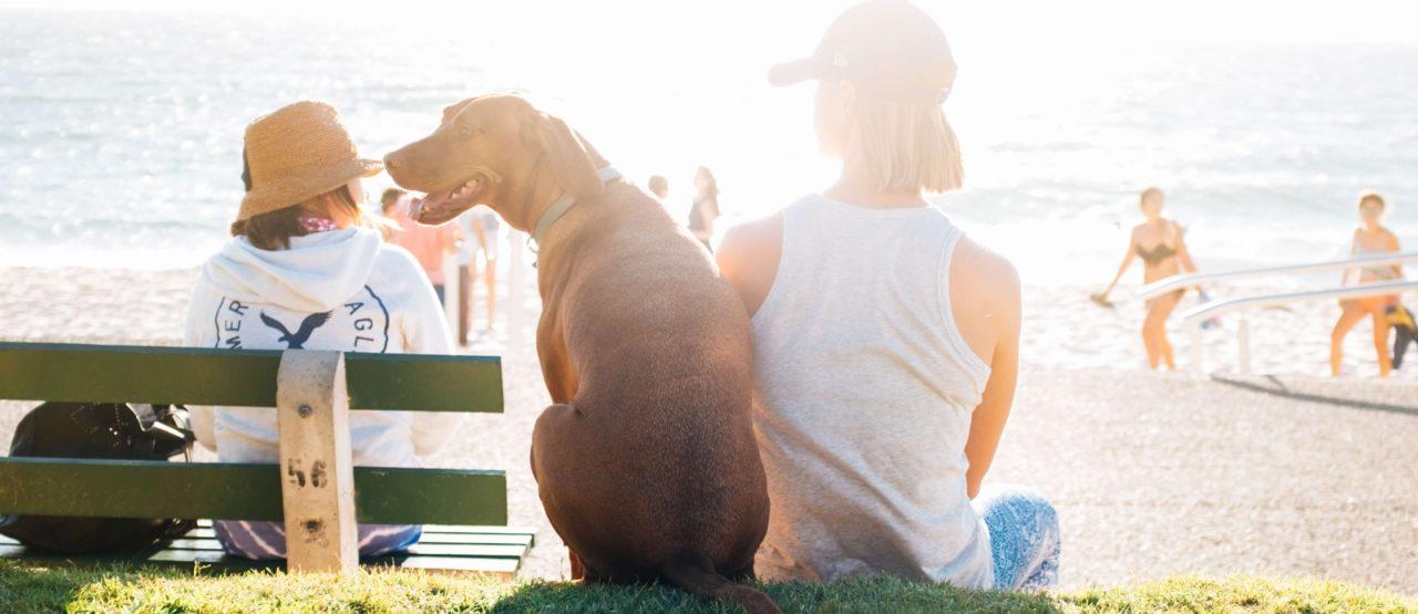 Como tomar el sol sin quemarse-Alice in Beautyland-dog